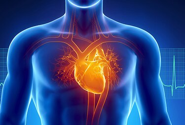 آناتومی قلب انسان
